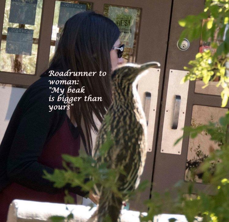 "RoadrunnerToWoman- ""MyBeakIsBiggerThanYours""2"